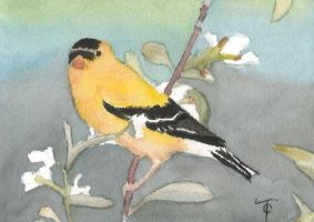 gold finch by tiffc