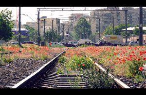 poppy on railway... by Iulian-dA-gallery