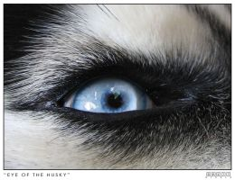 Eye of a Husky by neeth1um