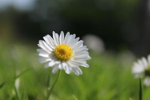 Daisy's by JamesDensham