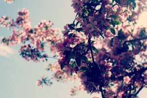 Pink by Eriin-Emely