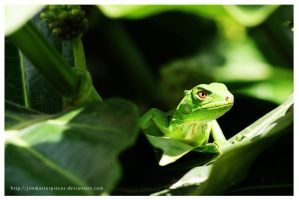 Iguana joven by Jimmasterpieces