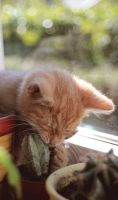 little ginger fan of cacti :3 by panna-poziomka
