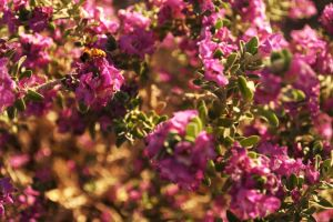 Purple Flowers with Bee by scarecrowmax