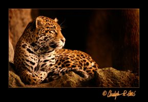 Jaguar by ulose2piranha