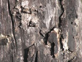 Wood Texture 7 by CharadeStock