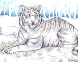 Old Art - Tiger Unfinished by JustRach