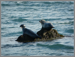 2 of Seals by Mogrianne