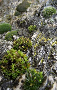 Mosses by Enirroc