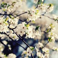 winter blooming. by magnesina
