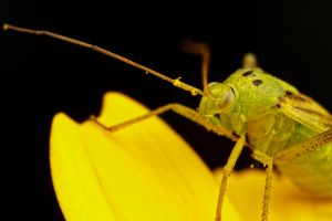 Green on Yellow by dalantech