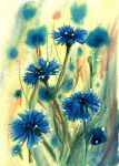 Cornflowers by doma22