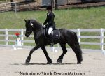 Dressage 001 by Notorious-Stock