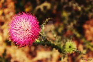 Little Pink 5 by rosetrace
