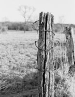 Barbed wire by leicaR5