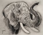 Elephant Sketch by Eriatarka24