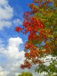 Fire Tree by bergunty