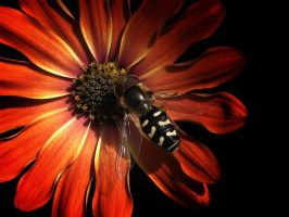 hover fly by awjay