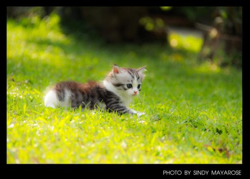 Ma Kitty 08 by sindycomment99