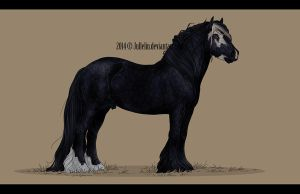 Gypsy Vanner Auction #5 ENDED by Jullelin