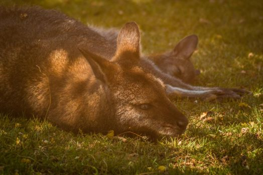 Tired by Mocz