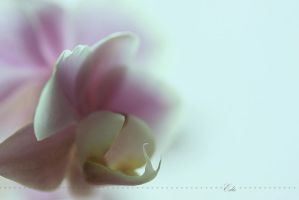 Orchid by 1001G
