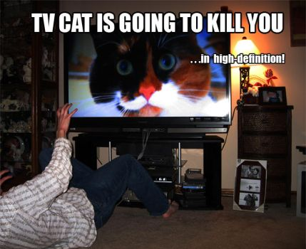 caturday -TV cat- by CleverConveyence