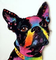 The Boston Terrier by deanrussoart
