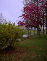 Rainy Spring Afternoon by sixwings