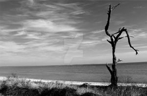 Beach Tree by JMEdenner