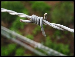 Barbed Wire by Pianochick66