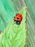 Coccinella... by Lord-Makro
