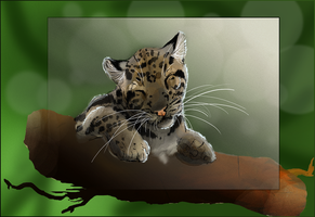 Clouded Leopard by SunStateGalleries