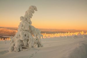 Frozen tree by Esveeka-Stock