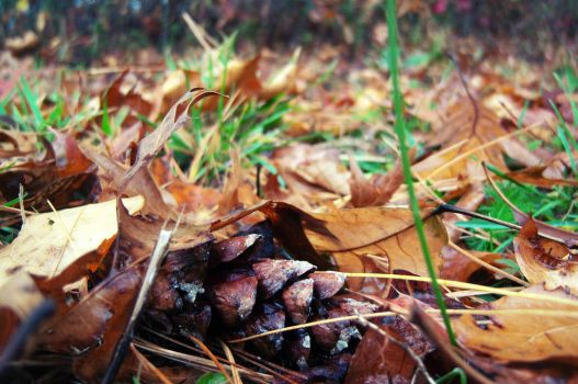 Pine Cone and Leaves by CyanideAssassin