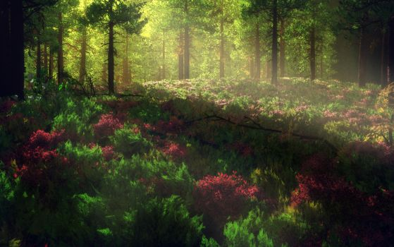 Forest by tonixus