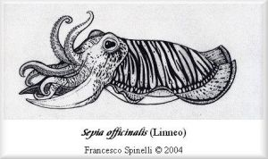 Squid by Galhad