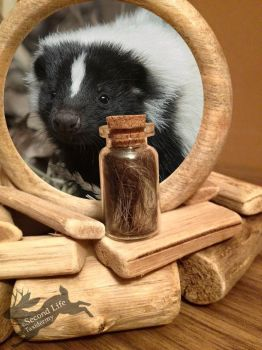 Skunk fur-bottle FOR SALE *Ethically sourced* by SecondLifeTaxidermy