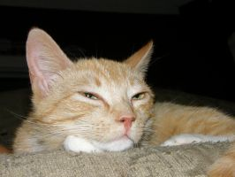 Ginger_Mother cat by redtailhawker