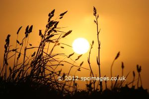 Grasses at sunset by stebev