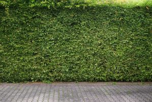 Green Hedge Background by LuDa-Stock