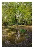 Epping Forest by Bartekkw