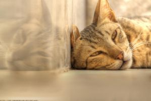 HDR cat by TMD-MQdesign