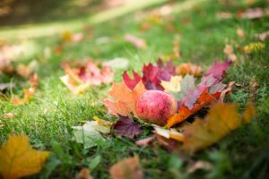 Gifts of Autumn by Booba84