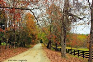 Fox Mansion Road by GlassHouse-1