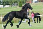 Friesian 2 by Colourize-Stock
