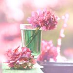 Pink Hydrangea by incolor16