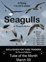 Seagulls by Paintedonmysoul by TUBE-TRADERS