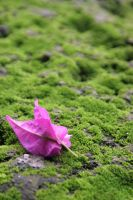 Petal in Mosses by KulaXX