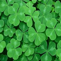 Happy St. Patrick's by deathnote1010
